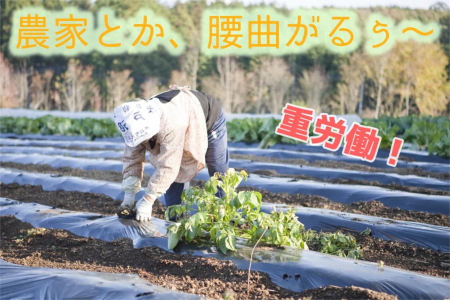 脱サラ農業は後悔する。